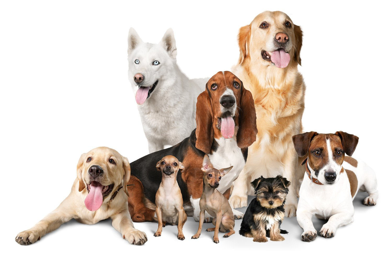 various types of dog breed together